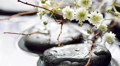Photo of flat black spa-like stones in shallow water with small white flowers and twigs placed over them, and additional stones are in the background. This photo is for holistic dentistry, which is available at Dentistry by Brooksher in Baton Rouge.